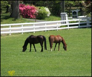 Atlanta GA equestrian estates